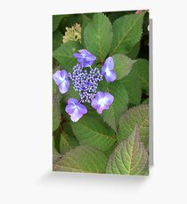 Beauty of a Wildflower Greeting Card
