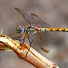 Dragon Fly - Colour by Graham Taylor