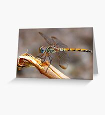 Dragon Fly - Colour Greeting Card