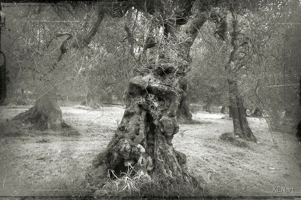 Old Olive tree by XENart