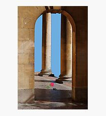 Fallen Rose Photographic Print