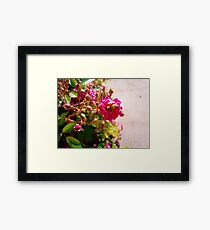 Roses bush Framed Print