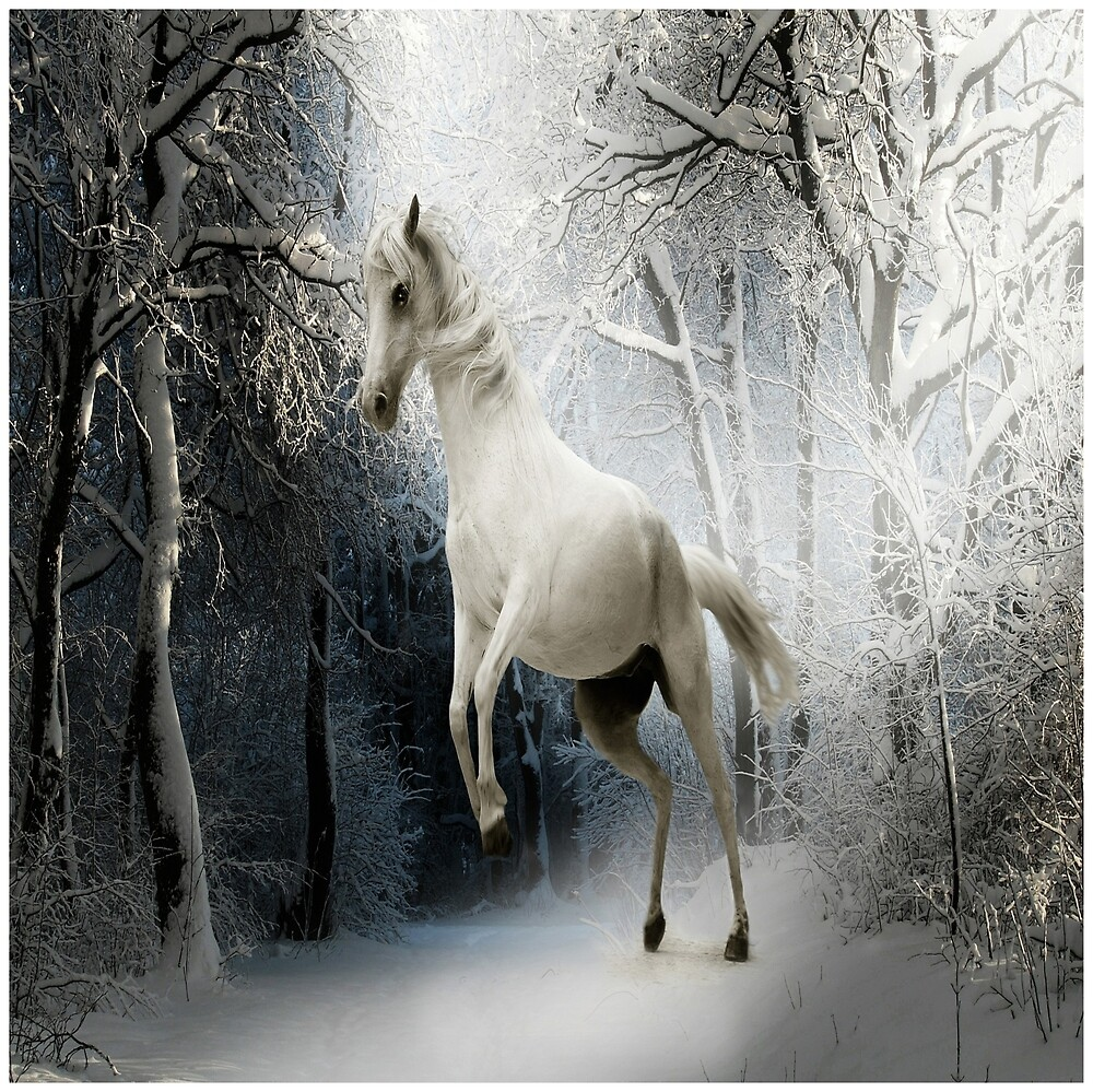 White horse in the snow by Welshsparkle