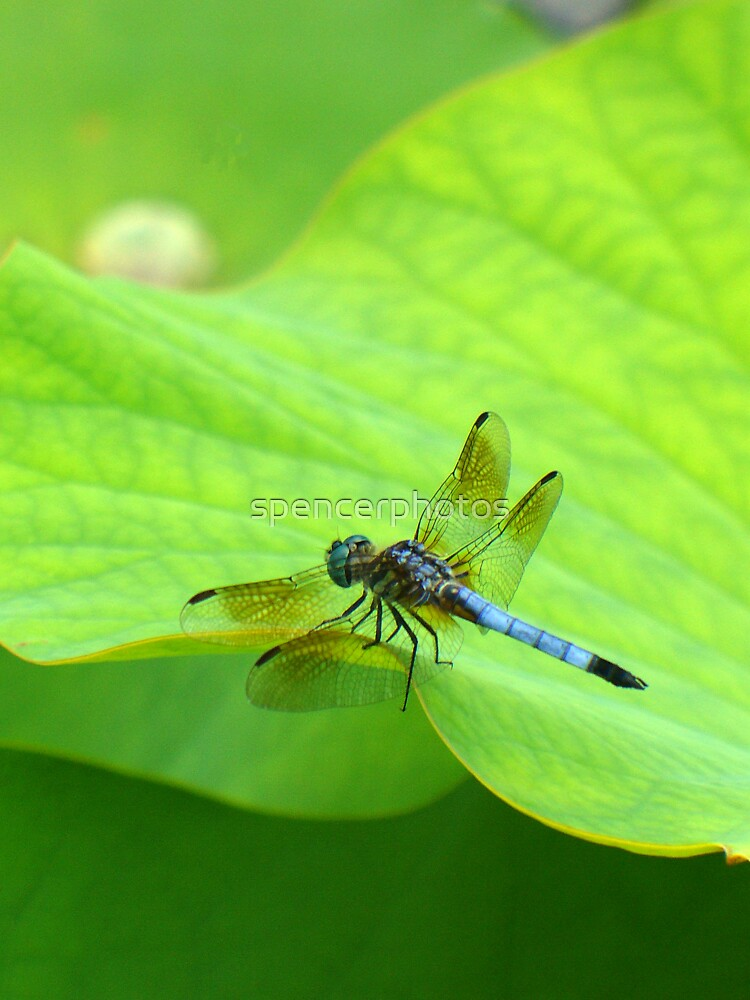 Dragonfly on Green by spencerphotos