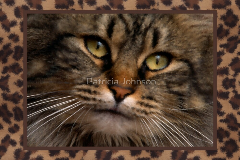 Cat Face by Patricia Johnson