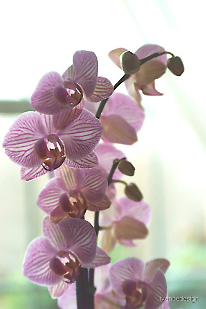Flowerz by ivancedesign