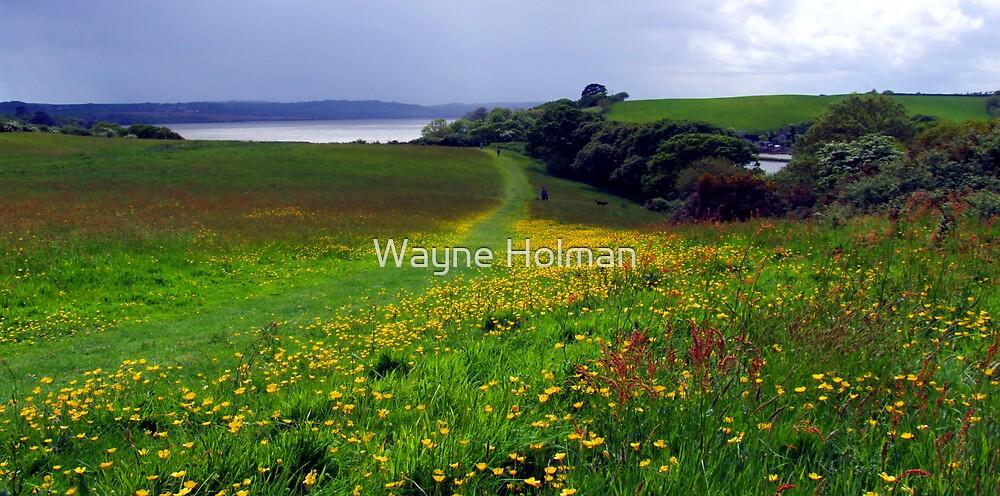 Buttercup Fields by Wayne Holman