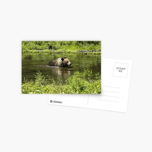 Bear Wash Postcard