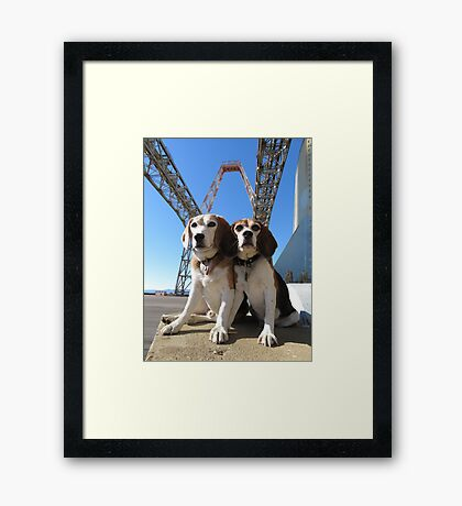 Indomitabeagle Framed Print