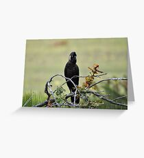 white tailed black cockatoo sitting pretty Greeting Card