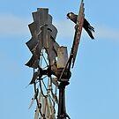 black cockatoo on windmill by Coralie Plozza