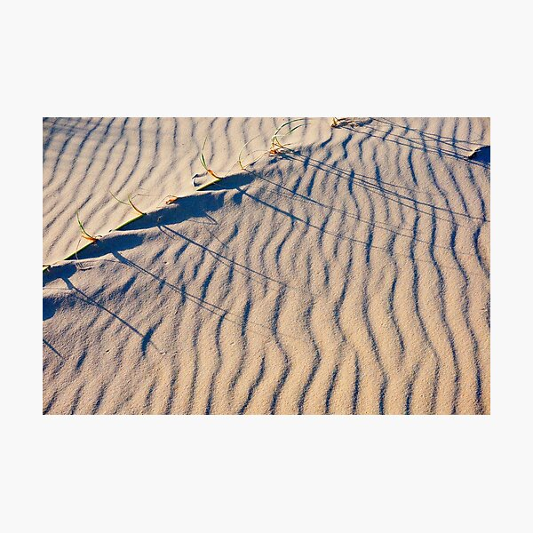 In the Dunes Photographic Print