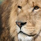 lion look by moseszap