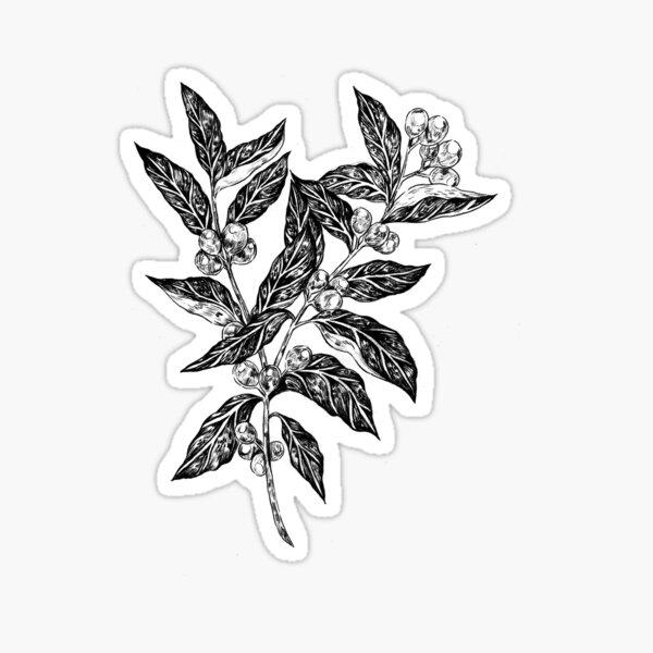 Coffea, Growing Sticker
