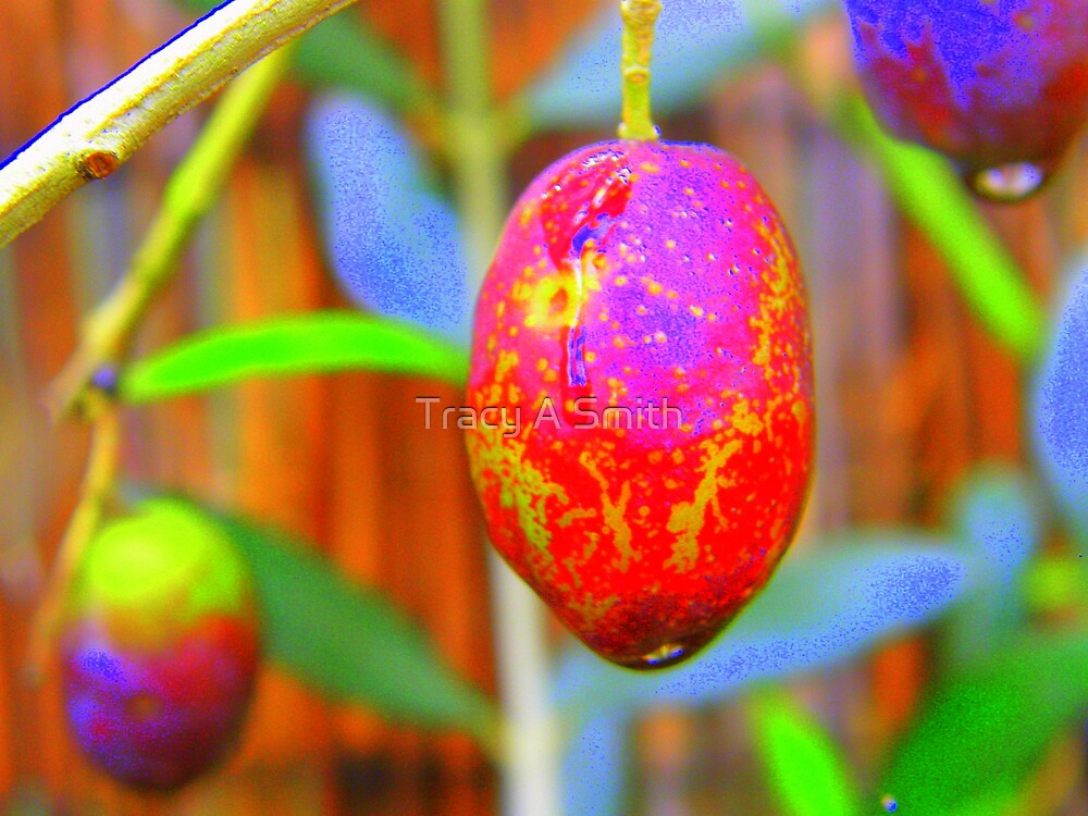 berry bright by Tracy A Smith
