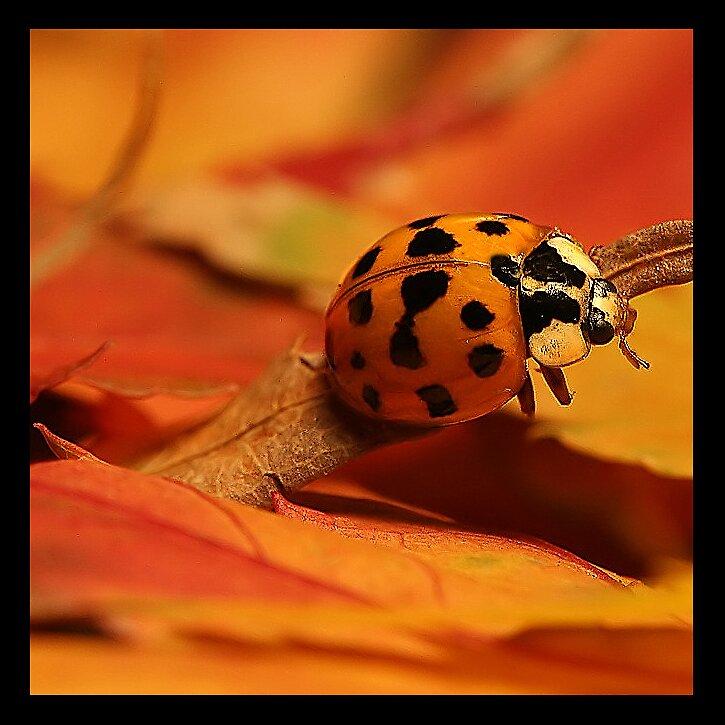 Ladybug by Rickcalif