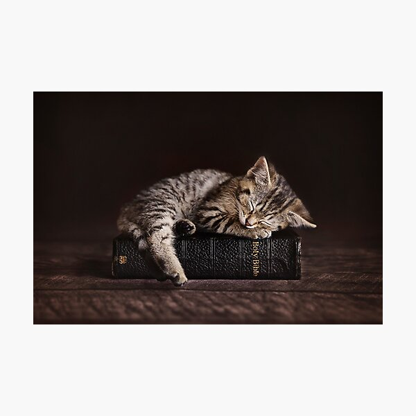 Bible Kitten Photographic Print