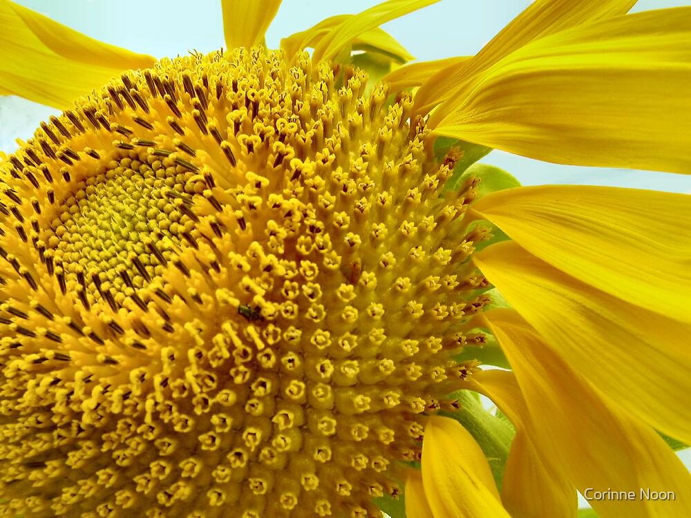Golden Flow by Corinne Noon