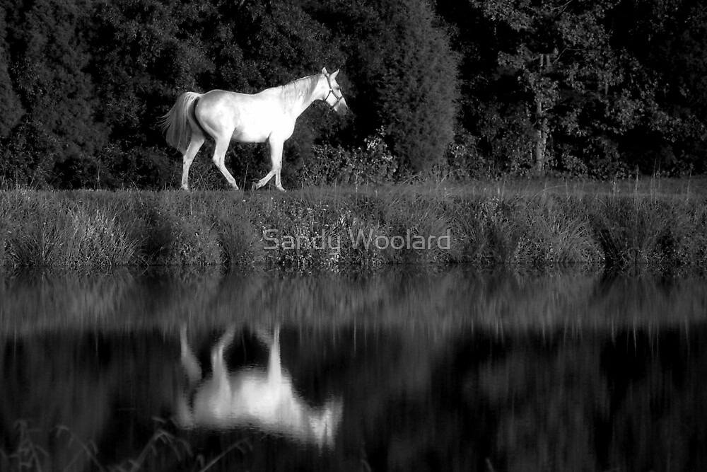 Wishing you Well by Sandy Woolard