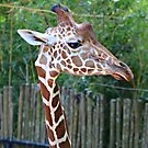 Spotted Longneck by Scott Mitchell