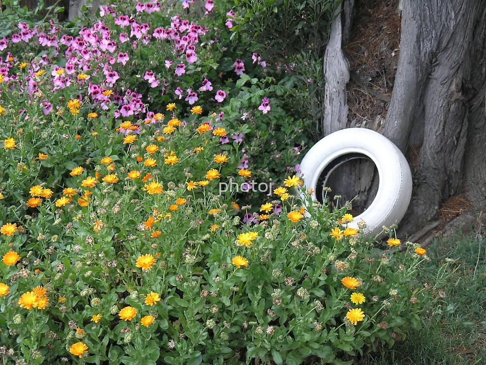 photoj Country Flora Landscape by photoj
