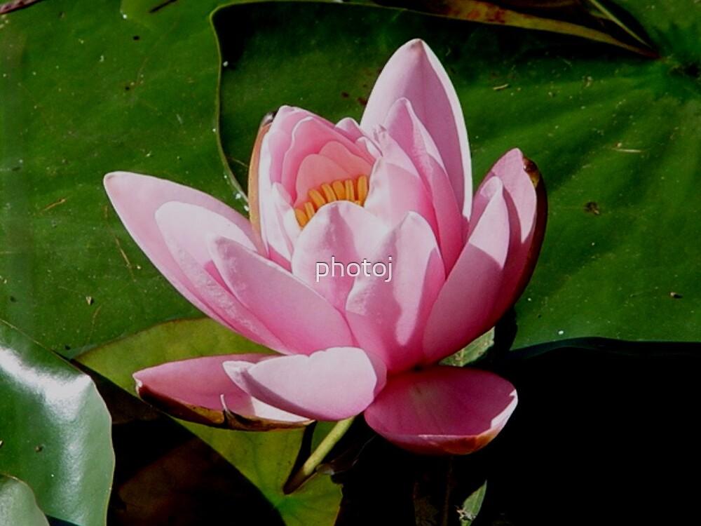 photoj Flora by photoj