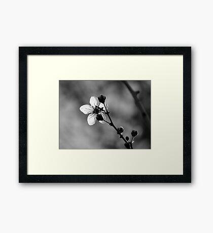 Blossom in Black & White Framed Print