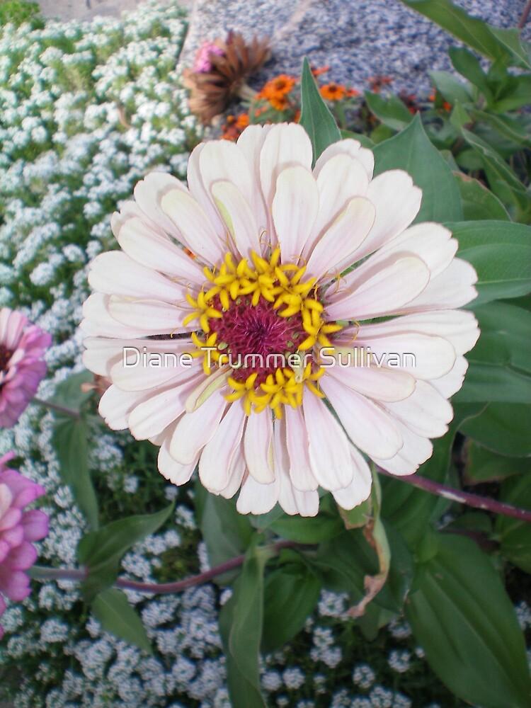 Single Perfect White Bloom by Diane Trummer Sullivan