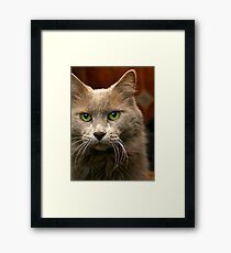 Feline Intensity Framed Print