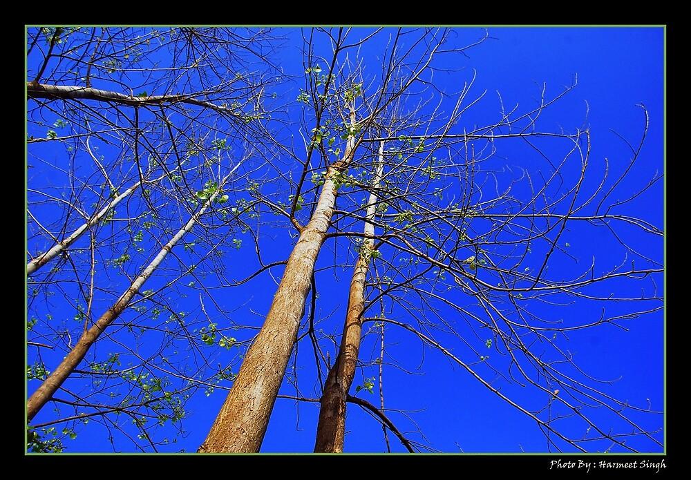 Towards blue by Dr. Harmeet Singh
