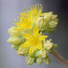 Blooms & Buds by Michael Matthews