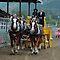 Heavy Horse Teams