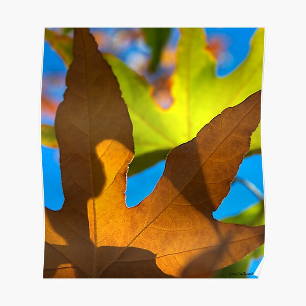 Autumn Patterns Poster