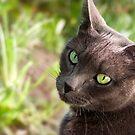 Green Eyes by Sue  Cullumber