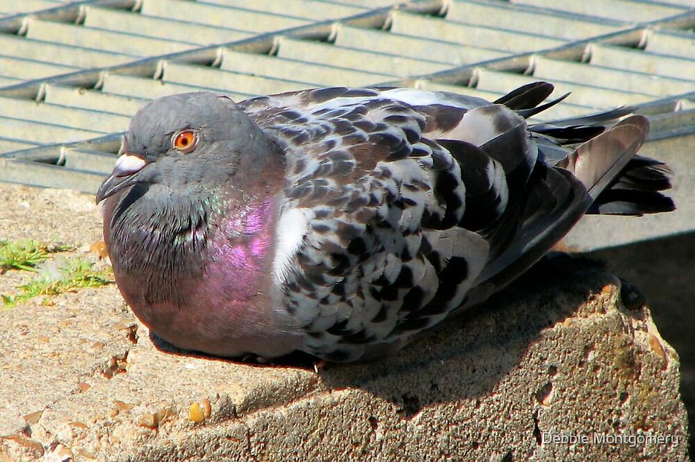nice looking Pigeon by Debbie Montgomery