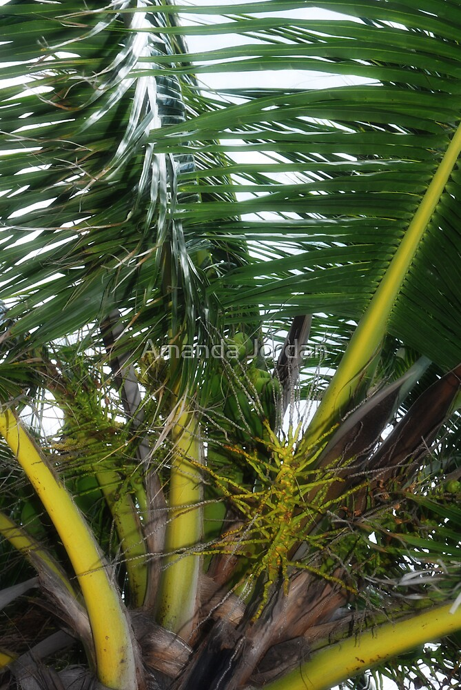 Glowing Palms by Amanda Jordan