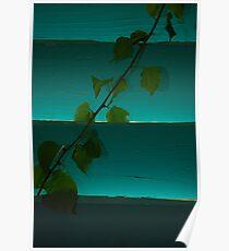 Ivy Slats Poster