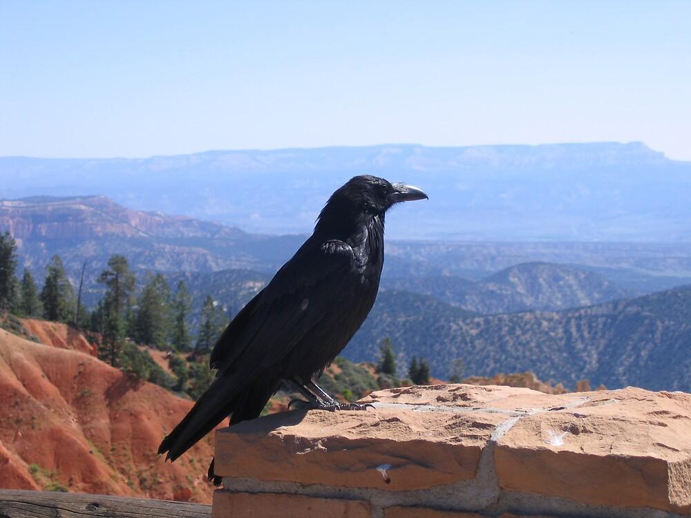 Bryce Canyon - Crow by Luke Brannon
