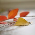 Autumn is coming ... by LynnEngland
