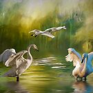 Swan dance by Brian Tarr