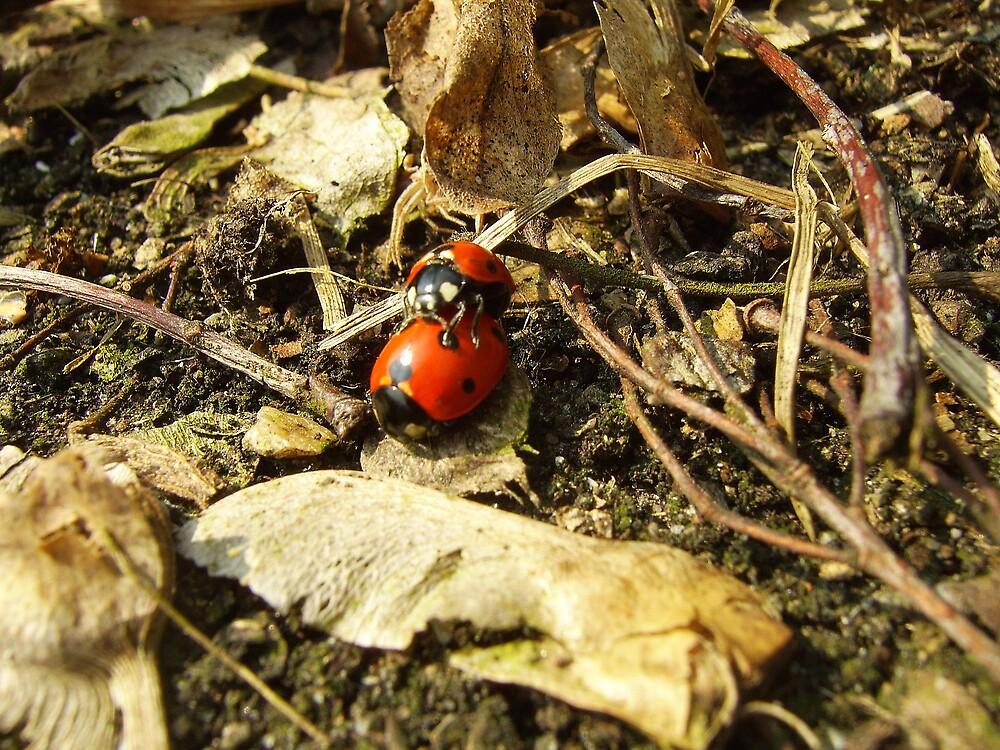 Ladybugs by alaskaman53