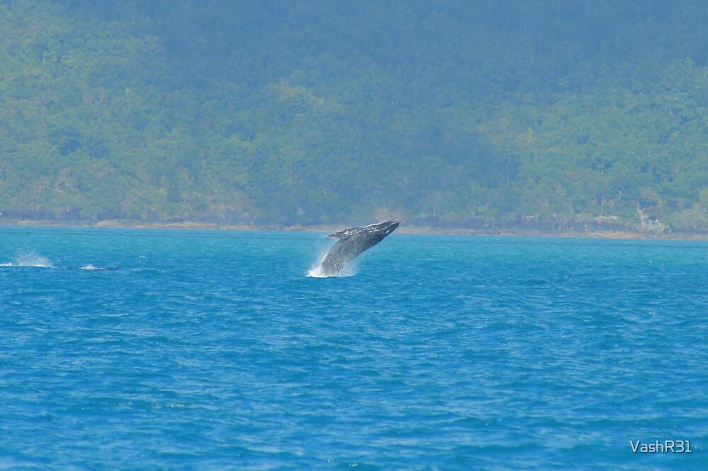 Whale breech by VashR31