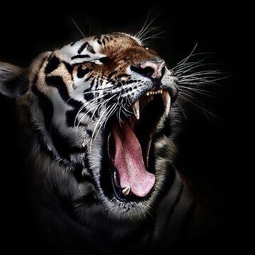 Tiger head by comtessek