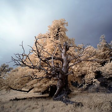 Limbs (False-colour Infrared) by PaulBradley