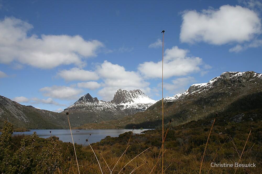 Cradle Mountain through button-grass, Central Highlands, Tasmania by Christine Beswick