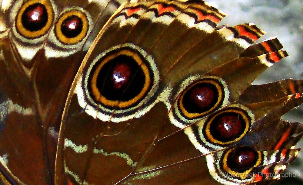 Close-up butterfly by Jocelyne Phillips