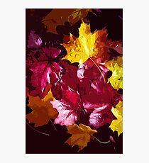 Autumnal carpet Photographic Print