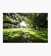 English countryside  Photographic Print
