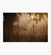 Fine nature Photographic Print