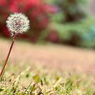Fine by nature: The Dandelion by Denis Marsili